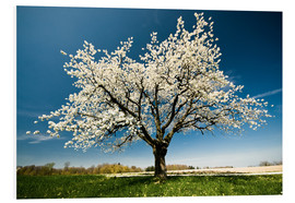 Obraz na PCV  Single blossoming tree in spring - Peter Wey