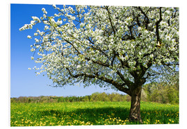 Obraz na PCV  Blossoming trees in spring rural meadow - Peter Wey