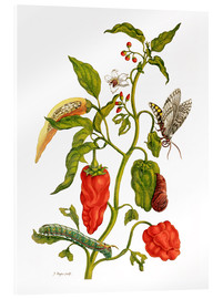 Obraz na szkle akrylowym  Peppers and insects - Maria Sibylla Merian