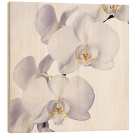 Obraz na drewnie  Orchid flowers - Johnny Greig