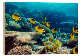 Obraz na drewnie  Red Sea raccoon butterflyfish - Georgette Douwma