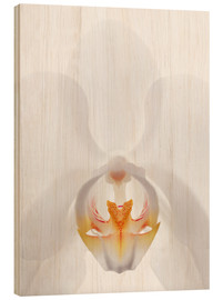 Obraz na drewnie  in the throat of the Orchid - GAVIN KINGCOME
