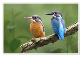 Plakat Kingfisher Germany