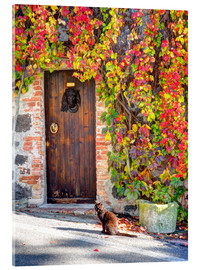 Obraz na szkle akrylowym  Cat in front of an ivy-lined door - Julie Eggers