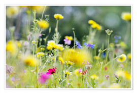 Plakat Summer Meadow with blooming wild Flowers