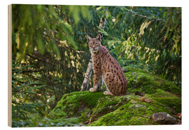 Obraz na drewnie  Lynx in the Bavarian National Park - Roberto Moiola