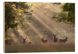 Obraz na drewnie  Deer in morning mist - Stuart Black