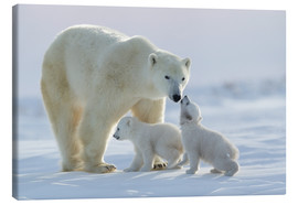 Obraz na płótnie  Polar bear family, Wapusk National Park - David Jenkins