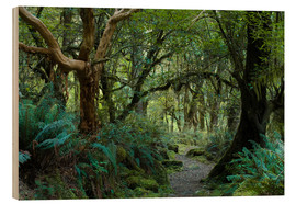 Obraz na drewnie  Primeval forest on kepler track, fiordland, new zealand - Peter Wey