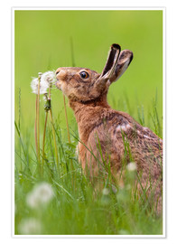 Plakat Kiss the dandelion