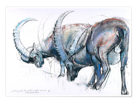Plakat  Ibex searching food - Mark Adlington