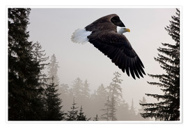 Plakat Bald Eagle in the Mist