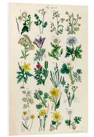 Obraz na PCV  Wildflowers - Sowerby Collection