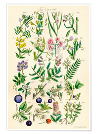 Plakat  Wildflowers - Sowerby Collection