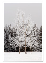 Plakat Frost On Trees