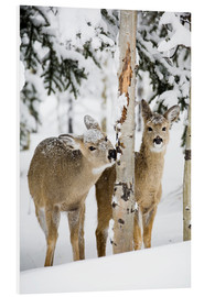 Obraz na PCV  Deers in a winter forest - Michael Interisano