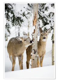 Plakat Deers in a winter forest