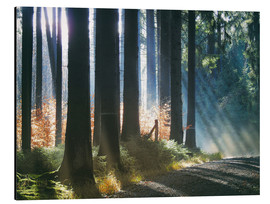 Obraz na aluminium  Morning Light in the Forrest - Martina Cross