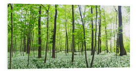 Obraz na PCV  A forest in springtime with wild garlic - Benjamin Butschell
