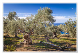 Plakat Ancient olive trees in Mallorca (Spain)