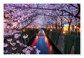 Plakat Pink cherry blossoms in Tokyo Japan