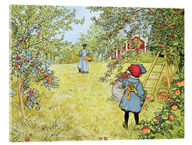 Obraz na szkle akrylowym  The Apple Harvest - Carl Larsson