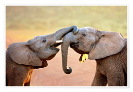 Plakat Two elephants interact gently with trunks