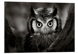Obraz na PCV  White-faced Owl perched in a tree - Johan Swanepoel