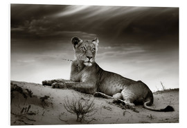 Obraz na PCV  Lioness resting on top of a sand dune - Johan Swanepoel