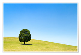 Plakat Lonely tree on a green meadow