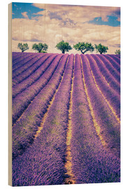 Obraz na drewnie  Lavender field with trees in Provence, France