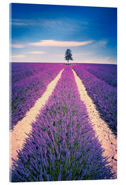 Obraz na szkle akrylowym  Lavender Field with tree in Provence, France