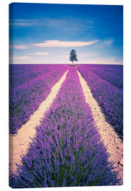 Obraz na płótnie  Lavender Field with tree in Provence, France