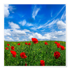Plakat Red poppies on green field