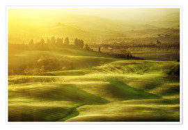 Plakat Wavy fields in Tuscany, Italy