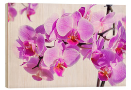 Obraz na drewnie  Beautiful pink-magenta orchid