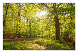 Plakat Spring forest with sunshine