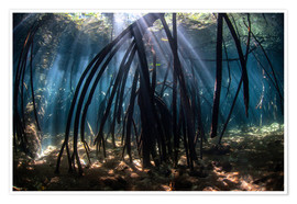 Plakat Beams of sunlight in a mangrove forest