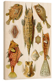 Obraz na drewnie  Ostraciontes cowfish species - Ernst Haeckel