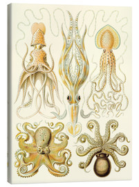 Obraz na płótnie  Squid and octopi - Ernst Haeckel