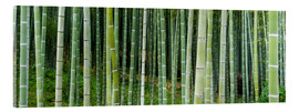 Obraz na szkle akrylowym  Green bamboo forest in Kyoto, Japan - Jan Christopher Becke
