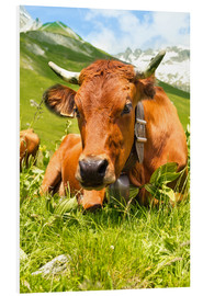 Obraz na PCV  Cow with bell on Mountain Pasture