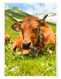 Plakat  Cow with bell on Mountain Pasture