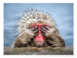 Plakat Japanese Macaque in a hot spring