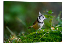 Obraz na aluminium  Cute tit standing on the forest ground - Peter Wey