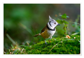 Plakat  Cute tit standing on the forest ground - Peter Wey