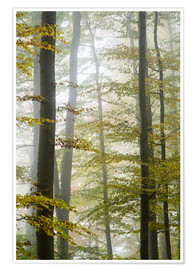 Plakat Foggy forest in autumn foliage