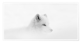 Plakat  Arctic fox in a snowstorm - Dominic Marcoux