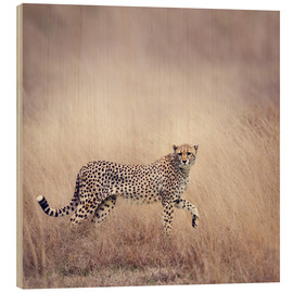 Obraz na drewnie  Cheetah on the hunt