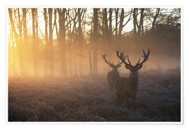Plakat Two deers in Richmond Park, London